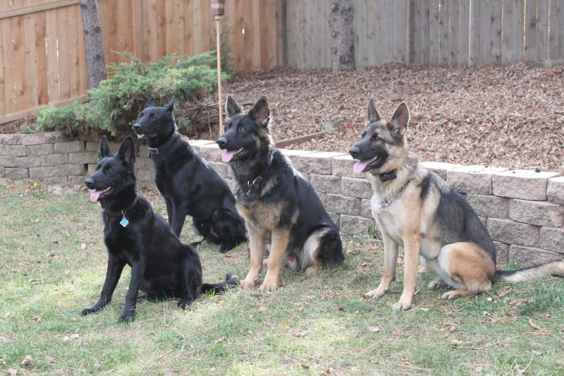 Minnesota K-9 Solutions - Home ProtectionYou can Play withMinnesota
